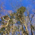樹氷を期待…2月の稲村ヶ岳